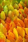 Herbstblathintergrund Stockbild