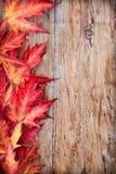 Herbstblathintergrund Lizenzfreies Stockfoto