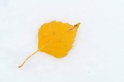 Herbstblatt über Schnee Lizenzfreies Stockbild