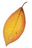 Herbstblatt Lizenzfreies Stockbild