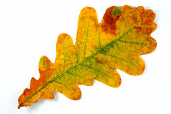 Herbstblatt? Stockbild