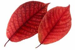 Herbstblatt? Stockfoto