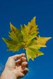 Herbstblatt Lizenzfreies Stockfoto