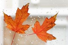 Herbstblatt Lizenzfreie Stockfotos