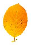 Herbstblatt Stockfotos