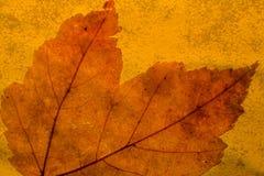 Herbstblatt Stockfotografie