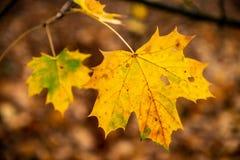 Herbstblatt auf Baum stockfoto