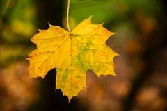 Herbstblatt auf Baum stockbild