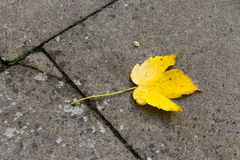 Yellow leaf on grey old floor Stock Images