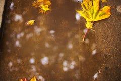 Herbstblatt auf dem Asphalt Lizenzfreie Stockfotos