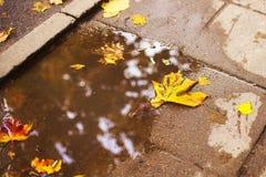 Herbstblatt auf dem Asphalt Stockfoto