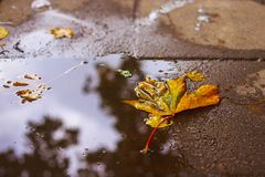 Herbstblatt auf dem Asphalt Stockfotos