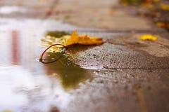 Herbstblatt auf dem Asphalt Stockbilder
