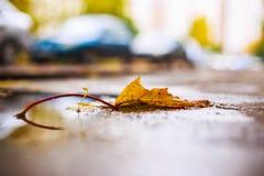 Herbstblatt auf dem Asphalt Lizenzfreie Stockbilder