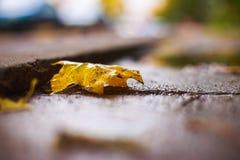 Herbstblatt auf dem Asphalt Stockfotografie