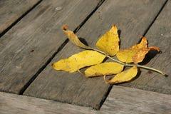 Herbstblatt auf den alten Brettern Stockfoto