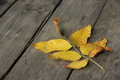 Herbstblatt auf den alten Brettern Lizenzfreie Stockbilder