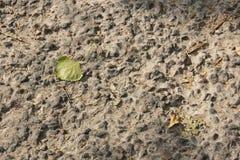 Herbstblatt auf einem Hintergrund der Steinstraße Lizenzfreies Stockbild