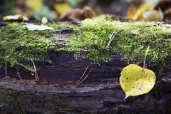 Herbstblatt auf einem Klotz Stockfotos