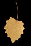 Herbstblatt auf einem schwarzen Hintergrund Lizenzfreie Stockbilder