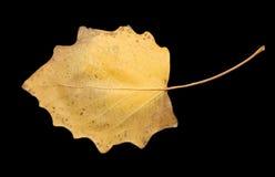 Herbstblatt auf einem schwarzen Hintergrund Stockbilder