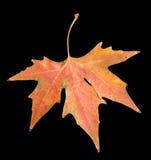 Herbstblatt auf einem schwarzen Hintergrund Lizenzfreies Stockfoto
