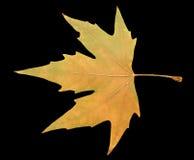 Herbstblatt auf einem schwarzen Hintergrund Lizenzfreies Stockbild