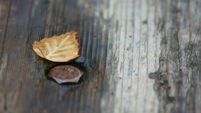 Herbstblatt auf einer nassen Bank Lizenzfreie Stockbilder