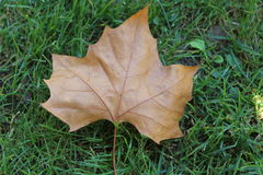 Herbstblatt auf grünem Gras Lizenzfreies Stockbild