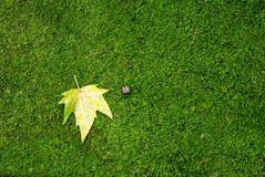 Herbstblatt auf grünem Moos Stockfotos