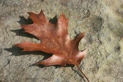 Herbstblatt auf Steinhintergrund Lizenzfreie Stockbilder