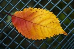 Herbstblatt auf Zaun Stockbilder