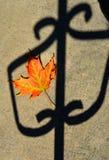 Herbstblatt auf Zaun Stockfoto