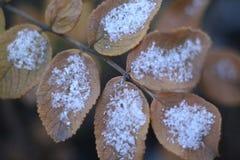 Herbstblatt bedeckte Schnee Winter kam Makro stockfotos