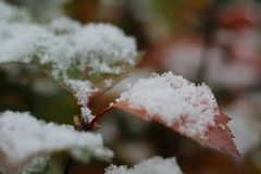 Herbstblatt bedeckte Schnee Winter kam Makro lizenzfreies stockbild