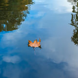 Herbstblatt, das auf Wasserreflexion des blauen Himmels und der weißen Wolken schwimmt Lizenzfreies Stockfoto