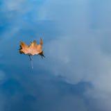 Herbstblatt, das auf Wasserreflexion des blauen Himmels und der weißen Wolken schwimmt Stockfoto