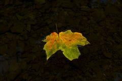 Herbstblatt, das in einen Strom schwimmt Lizenzfreie Stockfotografie