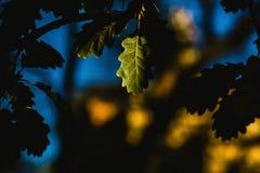 Herbstblatt in der Dunkelheit in einem Wald stockfotografie