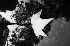 Herbstblatt in der Pfütze Stockbild
