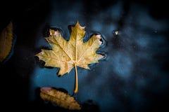 Herbstblatt in der Pfütze Lizenzfreie Stockfotos