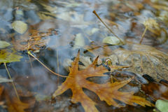 Herbstblatt in der Pfütze Lizenzfreie Stockbilder