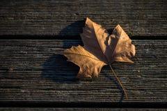 Herbstblatt einer hölzernen Planke Stockfoto