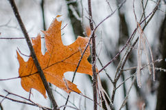 Herbstblatt in einer Winterlandschaft Lizenzfreies Stockbild