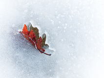 Herbstblatt eingefroren im Eis lizenzfreie stockfotografie