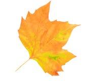 Herbstblatt getrennt auf weißem Hintergrund Lizenzfreies Stockbild