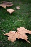 Herbstblatt im Gras Lizenzfreie Stockbilder