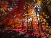 Herbstblatt Japan/Berg des Sees Kawakuchiko/Fujis Stockbilder