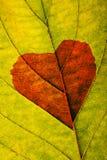 Herbstblatt mit Innerem Stockbild