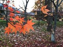 Herbstblatt und die Niederlassung lizenzfreies stockbild